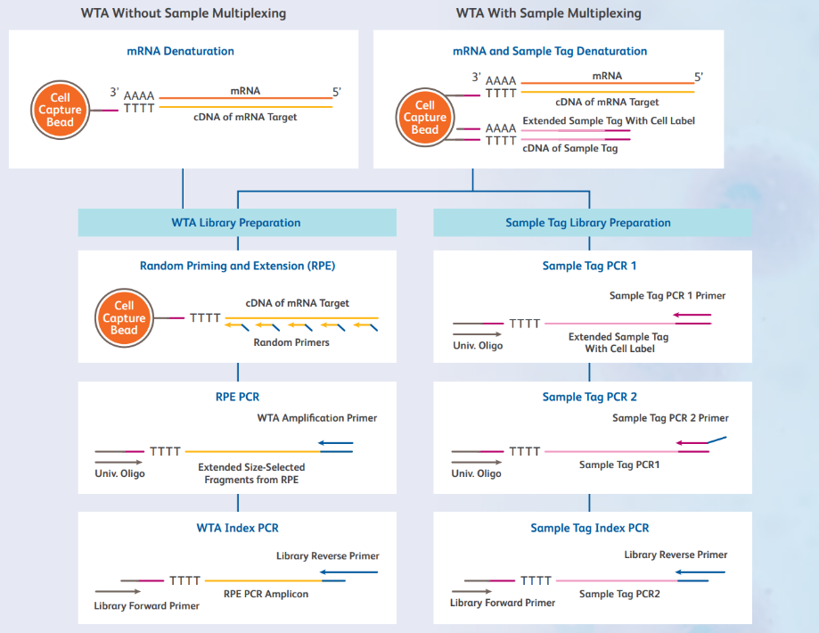 Overview of BD Rhapsody WTA Amplification kit library preparation workflow (with and without SMK)